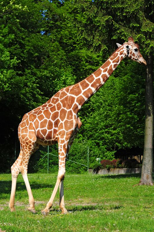 Jardin zoologique ljubljana visit ljubljana for Le jardin zoologique